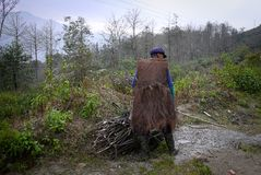 An elderly Chinese man is picking up branches. Yuanyang, Yunnan, China Royalty Free Stock Images