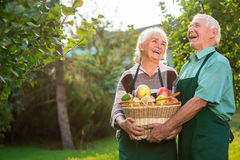 Elderly couple and apple basket. Woman and men laughing outdoor. Love, live and laugh Stock Photo