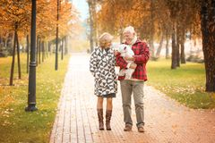 Elderly couple with cute dog in park stock photography