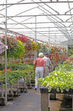 Elderly Couple-Greenhouse. Elderly couple shopping in a nursery. (12MP camera). Focus is on the couple Royalty Free Stock Images