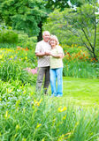 Elderly couple in love Royalty Free Stock Images