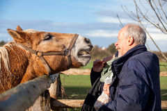 Elderly couple petting a horse in a paddock Stock Photo