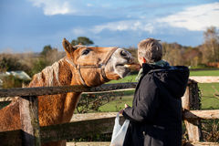 Elderly couple petting a horse in a paddock Royalty Free Stock Photo