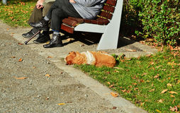 Elderly couple rests on bench with dog enjoying the autumn sunlight. Elderly couple resting on bench with dog enjoying the autumn sunlight Royalty Free Stock Photo