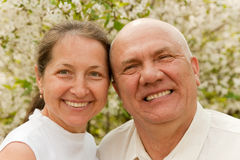 Elderly couple in spring Stock Photography