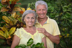 Elderly couple  in tropical garden Royalty Free Stock Images