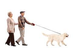 Elderly couple walking a dog Royalty Free Stock Image