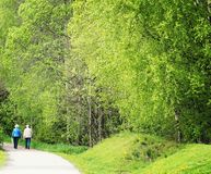 Elderly couple walking far away through a beautiful park with fresh green birch trees. On a asphalt road pn the verge of summer Stock Image