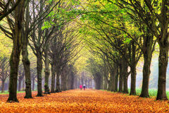 Autumn walk. Elderly couple walking in the forest in autumn in het Amsterdamse bos (Amsterdam wood) in the Netherlands. HDR Royalty Free Stock Images