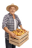 Elderly farmer holding a crate filled with pears Stock Images
