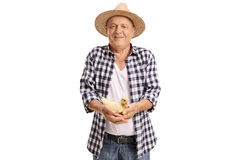Elderly farmer holding a small duckling Royalty Free Stock Image