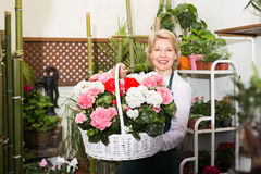 Elderly female florist holding a basket Stock Photography