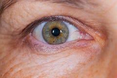 Elderly female`s green eye Stock Image