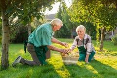 Elderly gardeners couple, apple basket. Royalty Free Stock Images