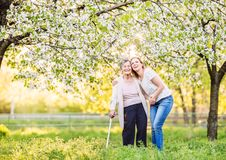 Elderly grandmother with crutch and granddaughter in spring nature. Elderly grandmother with forearm crutch and an adult granddaughter walking outside in spring stock photos
