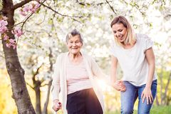 Elderly grandmother with crutch and granddaughter in spring nature. Elderly grandmother with forearm crutch and an adult granddaughter walking outside in spring royalty free stock photography