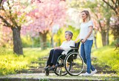 Elderly grandmother in wheelchair with granddaughter in spring nature. Elderly grandmother in wheelchair with an adult granddaughter on a walk oute in spring royalty free stock photos