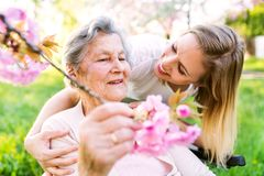 Elderly grandmother in wheelchair with granddaughter in spring nature. stock images