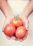 Elderly hands holding fresh tomatoes with vintage style. Elderly hands holding organic fresh tomatoes with vintage style royalty free stock images