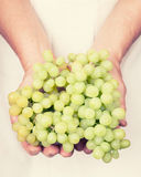 Elderly hands holding organic fresh green grapes Stock Image
