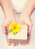 Elderly hands holding sunflower based halva. With retro style royalty free stock photos