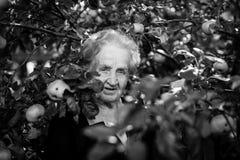 Elderly happy woman portrait in the Apple garden. Stock Photography