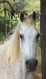An Elderly Horse hiding in the Forest Stock Image