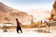 Elderly iranian shepherd with a donkey. Iran Stock Images