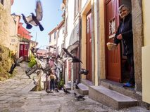 Free Elderly Lady Feeds Pigeons In Front Of Her House In The Old Town Royalty Free Stock Photos - 112838178