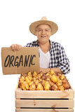 Elderly male farmer with pears and cardboard sign Stock Images