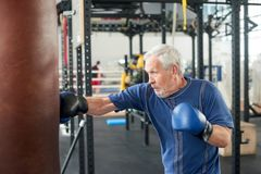 Elderly male person practicing box in gym. Healthy senior man in sportswear and blue gloves boxing punching bag in gym stock photography