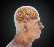 Elderly Male with Unhealthy Brain. Illustration. 3D render royalty free illustration