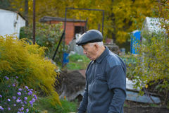 Elderly man. The elderly man in a cap against the nature Stock Photography