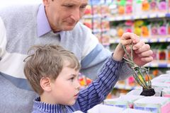 Elderly man with boy in shop choose  rose sapling Stock Image