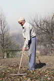 Elderly man cleans rake dry leaves Stock Photography