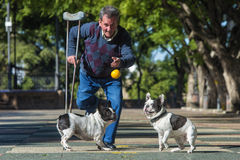 Elderly man with crutch playing with his dogs. On the sunny street stock images