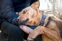 An elderly man with a dog. A man holds a dog`s paw in his hand. The owner caresses the dog_ stock photos