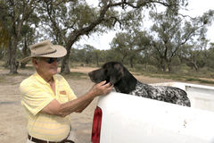Elderly Man and Dog. An elderly man pats his German Short Haired Pointer sitting in the back of his pickup truck Royalty Free Stock Images