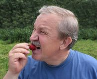 Elderly man, eating a strawberry Stock Photography