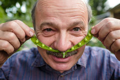 An elderly man is fooling around. He holds a pea pod near his face like a mustache Stock Images