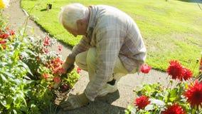 Elderly man gardening. Camera panning down to an elderly man gardening stock video footage