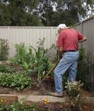 Elderly Man Gardening Stock Photos