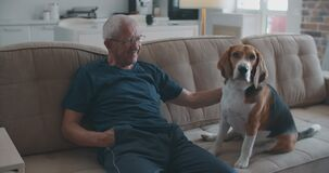 An elderly man with glasses is sitting on a sofa with his beagle dog. Communication of an elderly owner with a dog. The
