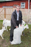 Elderly man with a goat and a bag of grass Royalty Free Stock Images