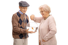 Elderly man with goldfish and an elderly woman feeding it Royalty Free Stock Photos