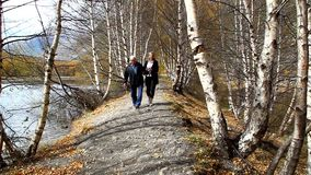 An elderly man with a grown daughter walking on a path in the forest stock video