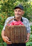 Elderly man, harvesting an apple Stock Images