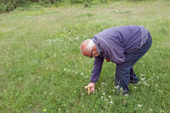Elderly man picked mushrooms in a meadow Royalty Free Stock Photography