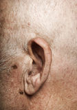 Elderly man's ear Royalty Free Stock Photo