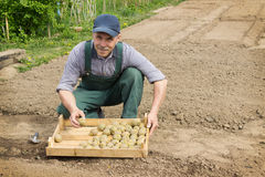 Elderly  man with smile planting potatoes in his garden Stock Photo